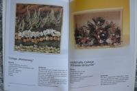 Zauberhafte Natur Collagen / Sieglinde Holl (Topp - 1988)